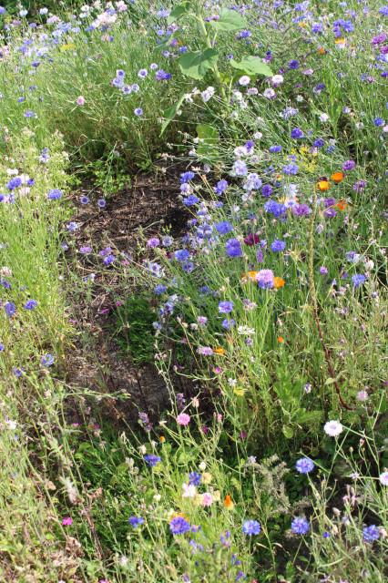 Überall Blumen - nur auf dem Kompost nicht