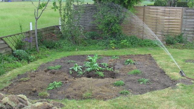 Frisch bepflanzte Fläche unterm Rasenspränger