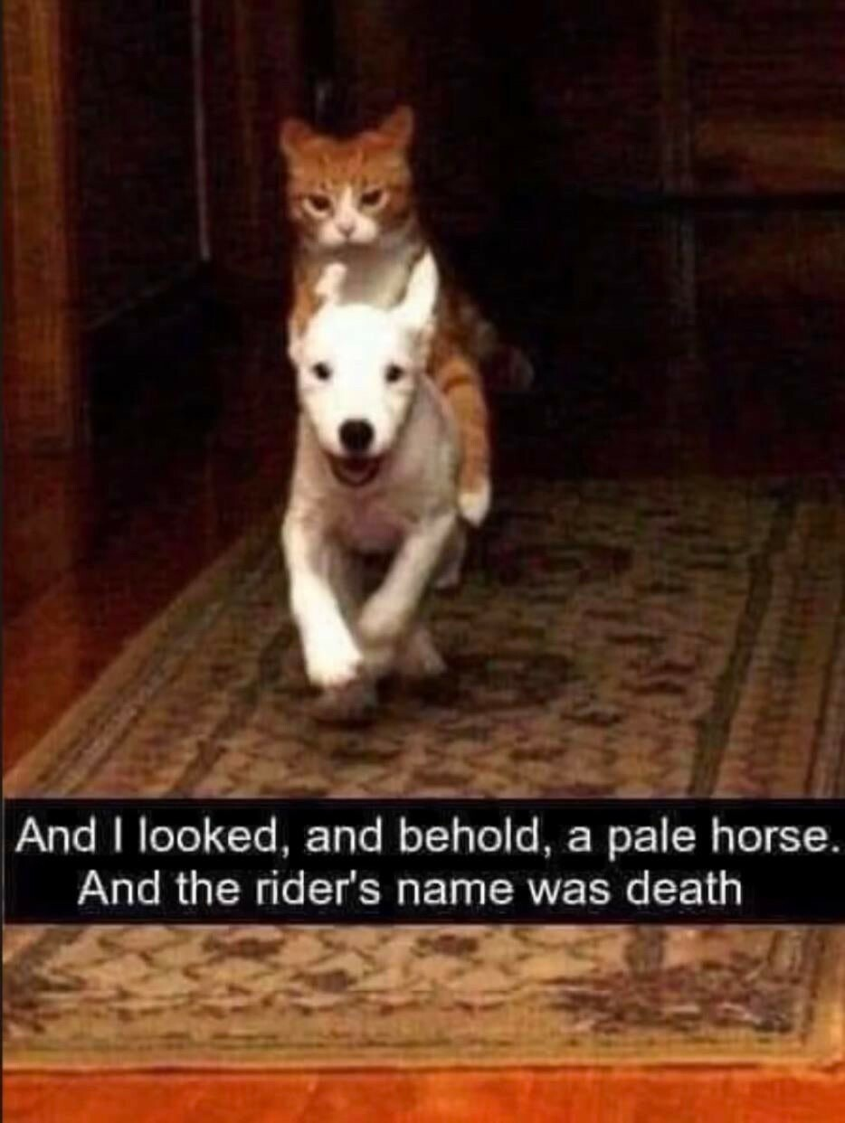a very fierce looking orange cat on the back of a small white dog, which is running towards the camera. text: 'And I looked, and behold, a pale horse. And the rider's name was death'