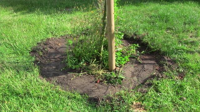 Pflanzkreis um Baum